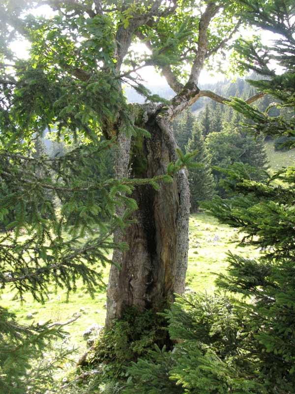 hilfen um bäume zu besteigen